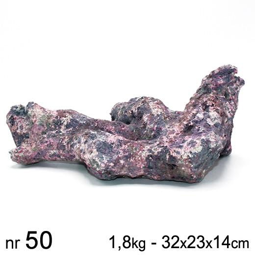 dutch reef rock bones