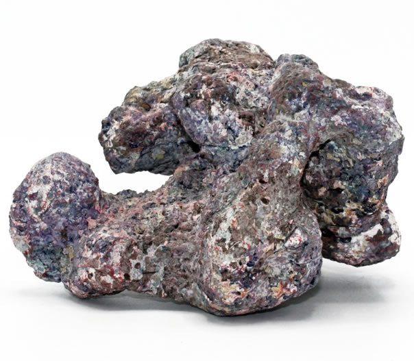 pierre de roche de récif néerlandais